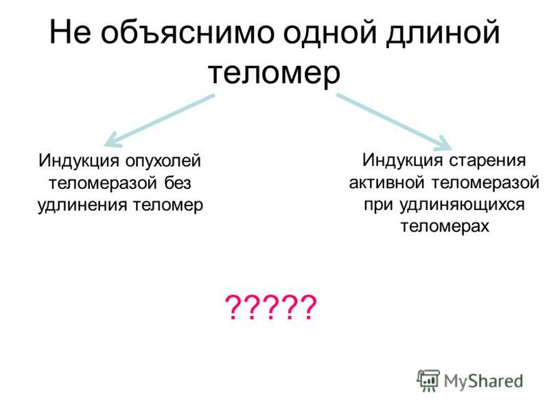 Не объяснимо одной длиной теломер Индукция опухолей теломеразой без удлинения теломер Индукция старения активной теломеразой при удлиняющихся теломерах ?????
