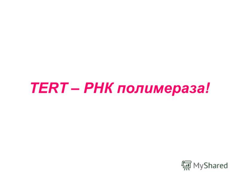 TERT – РНК полимераза!