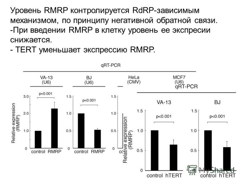 Уровень RMRP контролируется RdRP-зависимым механизмом, по принципу негативной обратной связи. -При введении RMRP в клетку уровень ее экспресии снижается. - ТЕRТ уменьшает экспрессию RMRP.