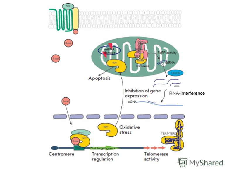 RNA-interference