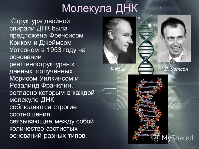 Молекула ДНК Структура двойной спирали ДНК была предложена Френсисом Криком и Джеймсом Уотсоном в 1953 году на основании рентгеноструктурных данных, полученных Морисом Уилкинсом и Розалинд Франклин, согласно которым в каждой молекуле ДНК соблюдаются