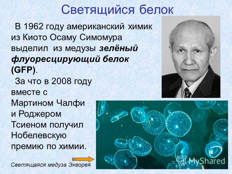 Светящийся белок В 1962 году американский химик из Киото Осаму Симомура выделил из медузы зелёный флуоресцирующий белок (GFP). Светящаяся медуза Экворея За что в 2008 году вместе с Мартином Чалфи и Роджером Тсиеном получил Нобелевскую премию по химии