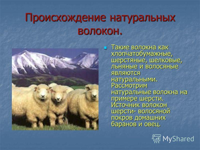 Происхождение натуральных волокон. Такие волокна как хлопчатобумажные, шерстяные, шелковые, льняные и волосяные являются натуральными. Рассмотрим натуральные волокна на примере шерсти. Источник волокон шерсти- волосяной покров домашних баранов и овец