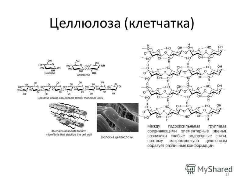 Целлюлоза (клетчатка) 15 Между гидроксильными группами, соединяющими элементарные звенья, возникают слабые водородные связи, поэтому макромолекула целлюлозы образует различные конформации Волокна целлюлозы