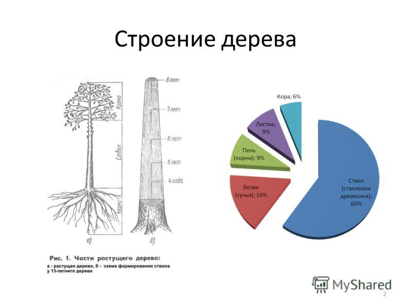 Строение дерева 2
