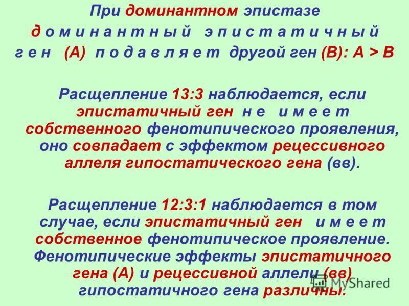 При доминантном эпистазе д о м и н а н т н ы й э п и с т а т и ч н ы й г е н (А) п о д а в л я е т другой ген (В): А > В Расщепление 13:3 наблюдается, если эпистатичный ген н е и м е е т собственного фенотипического проявления, оно совпадает с эффект