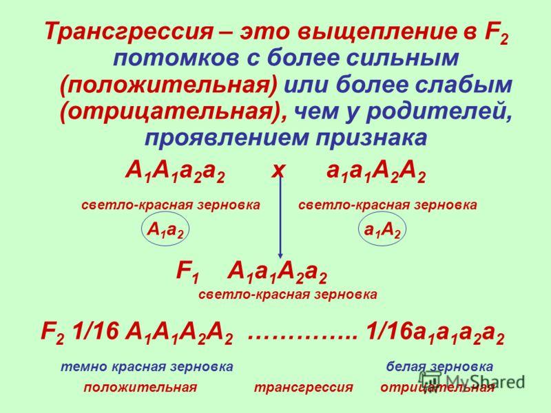 Трансгрессия – это выщепление в F 2 потомков с более сильным (положительная) или более слабым (отрицательная), чем у родителей, проявлением признака А 1 А 1 а 2 а 2 х а 1 а 1 А 2 А 2 светло-красная зерновка светло-красная зерновка F 1 А 1 а 1 А 2 а 2