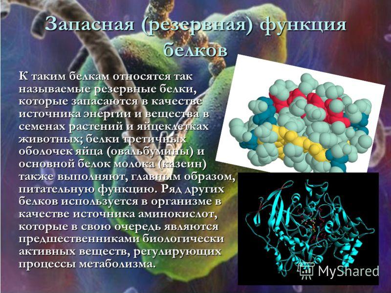 Запасная (резервная) функция белков К таким белкам относятся так называемые резервные белки, которые запасаются в качестве источника энергии и вещества в семенах растений и яйцеклетках животных; белки третичных оболочек яйца (овальбумины) и основной