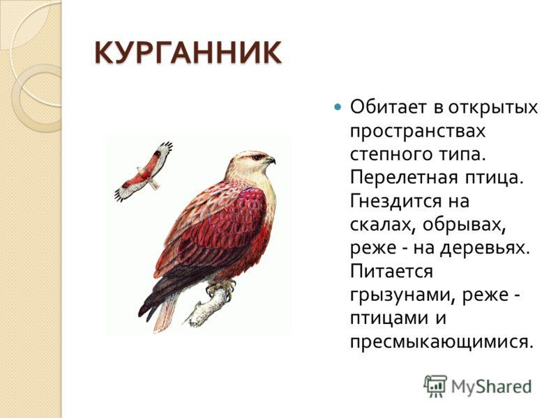 КУРГАННИК Обитает в открытых пространствах степного типа. Перелетная птица. Гнездится на скалах, обрывах, реже - на деревьях. Питается грызунами, реже - птицами и пресмыкающимися.