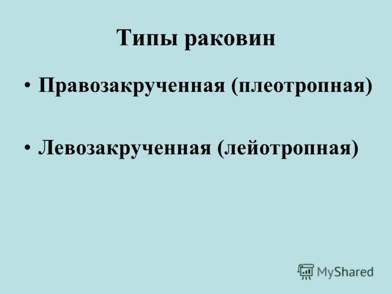 Типы раковин Правозакрученная (плеотропная) Левозакрученная (лейотропная)