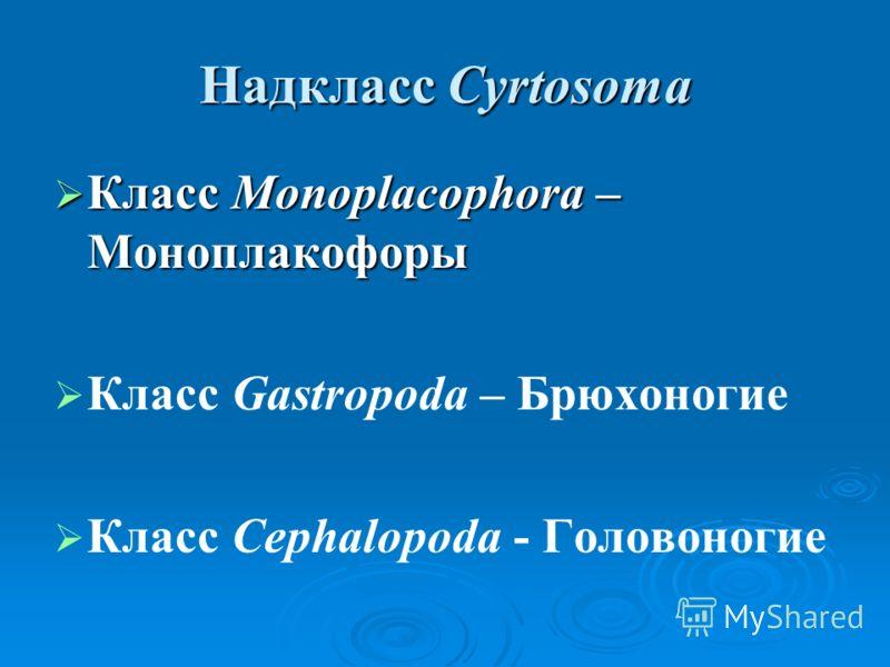 Надкласс Cyrtosoma Класс Monoplacophora – Моноплакофоры Класс Monoplacophora – Моноплакофоры Класс Gastropoda – Брюхоногие Класс Cephalopoda - Головоногие