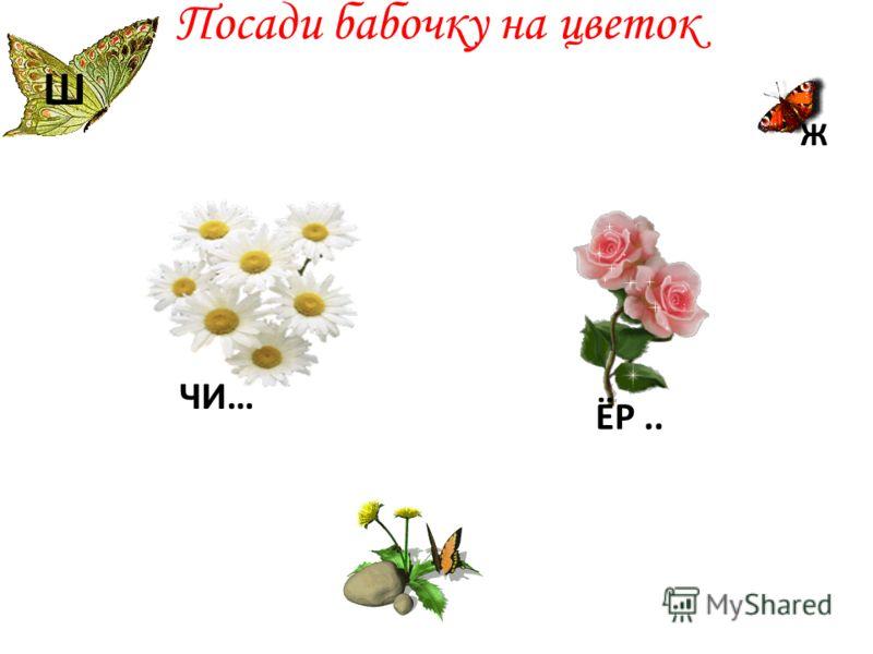 Посади бабочку на цветок Ж ЧИ… Ш ЁР..
