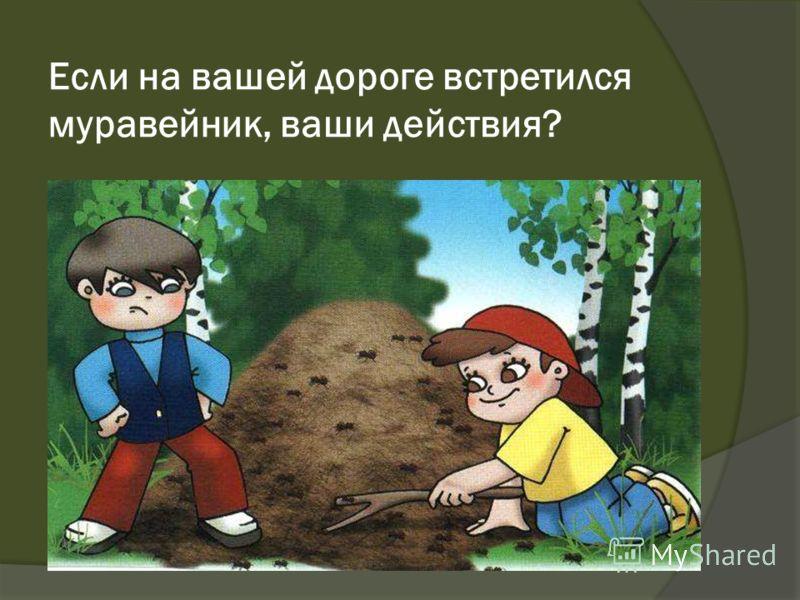 Если на вашей дороге встретился муравейник, ваши действия?