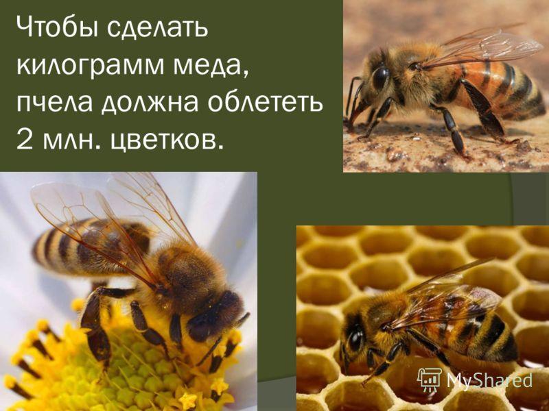 Чтобы сделать килограмм меда, пчела должна облететь 2 млн. цветков.