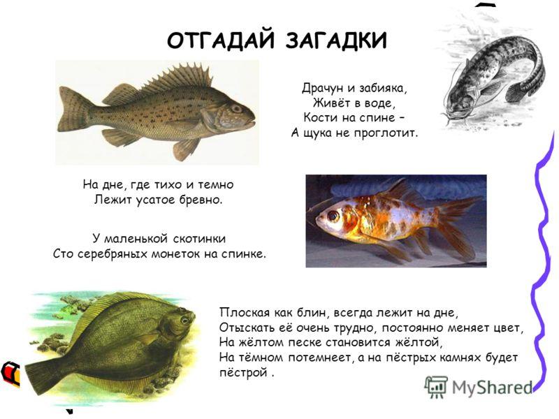 ребусы про рыбалку