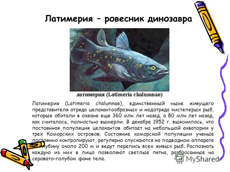 Латимерия - ровесник динозавра Латимерия (Latimeria chalumnae), единственный ныне живущего представителя отряда целакантообразных и надотряда кистеперых рыб, которые обитали в океане еще 360 млн лет назад, а 80 млн лет назад, как считалось, полностью