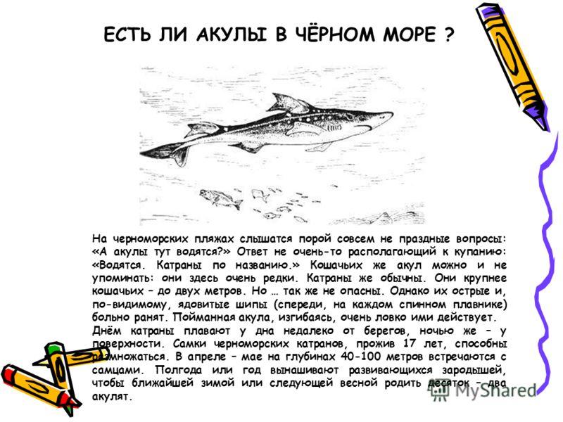 ЕСТЬ ЛИ АКУЛЫ В ЧЁРНОМ МОРЕ ? На черноморских пляжах слышатся порой совсем не праздные вопросы: «А акулы тут водятся?» Ответ не очень-то располагающий к купанию: «Водятся. Катраны по названию.» Кошачьих же акул можно и не упоминать: они здесь очень р