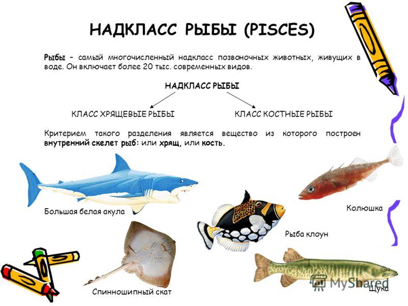 Н.В. «Класс Рыбы».