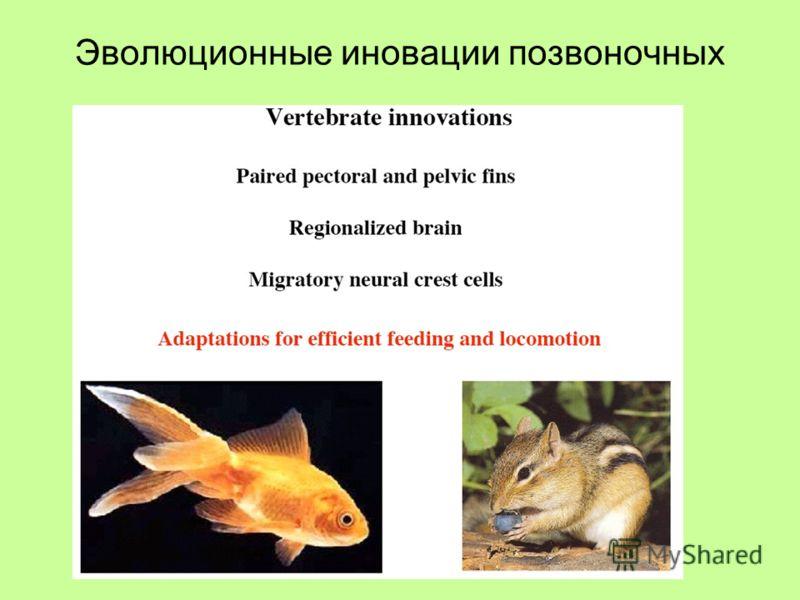 Эволюционные иновации позвоночных