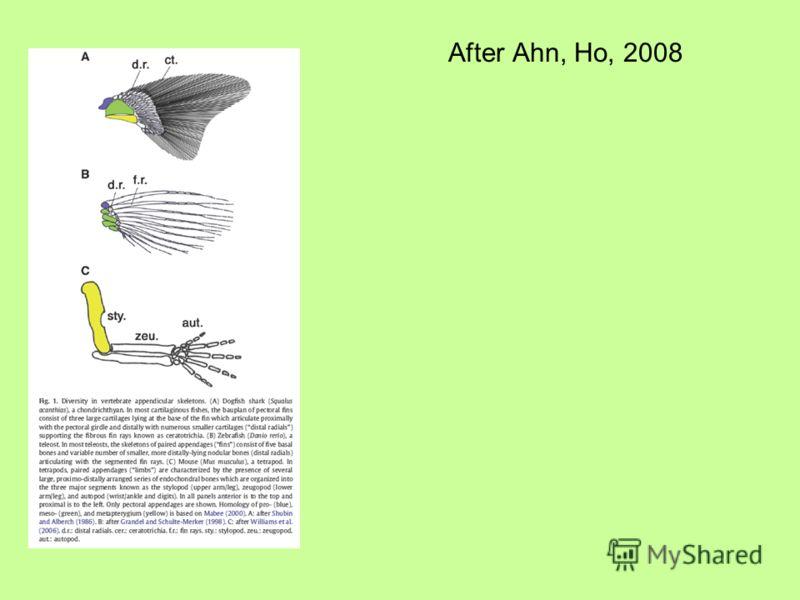After Ahn, Ho, 2008