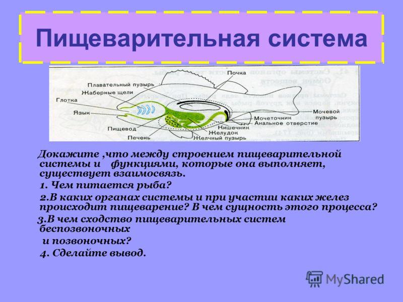 Пищеварительная система Докажите,что между строением пищеварительной системы и функциями, которые она выполняет, существует взаимосвязь. 1. Чем питается рыба? 2.В каких органах системы и при участии каких желез происходит пищеварение? В чем сущность