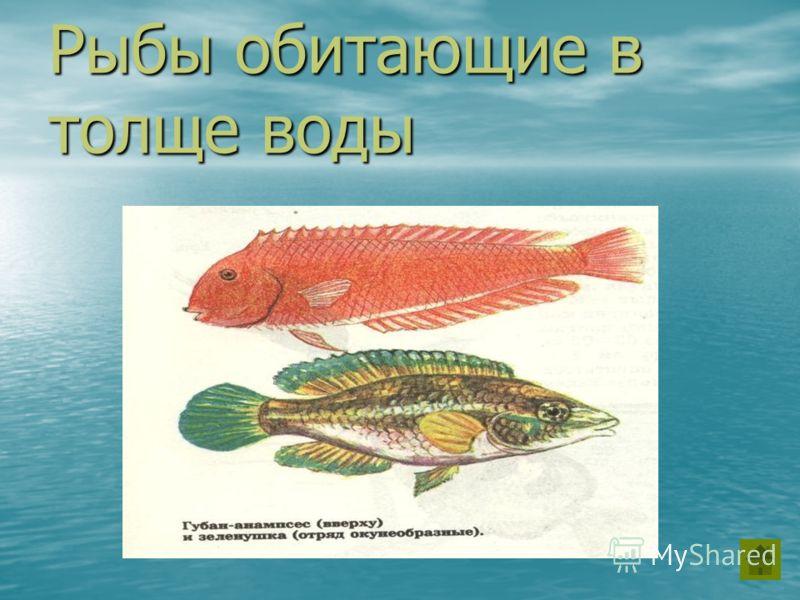 Рыбы обитающие в толще воды