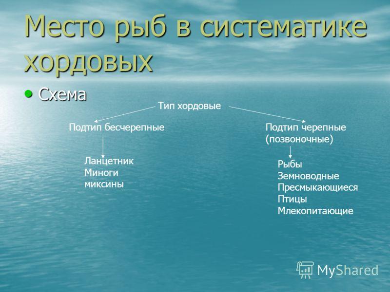 Место рыб в систематике хордовых Схема Схема Тип хордовые Подтип бесчерепныеПодтип черепные (позвоночные) Ланцетник Миноги миксины Рыбы Земноводные Пресмыкающиеся Птицы Млекопитающие