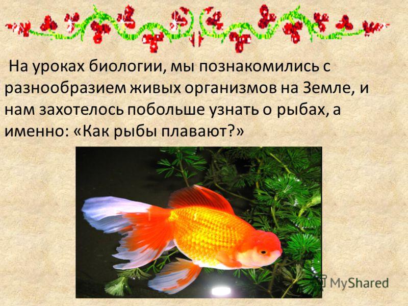 На уроках биологии, мы познакомились с разнообразием живых организмов на Земле, и нам захотелось побольше узнать о рыбах, а именно: «Как рыбы плавают?»