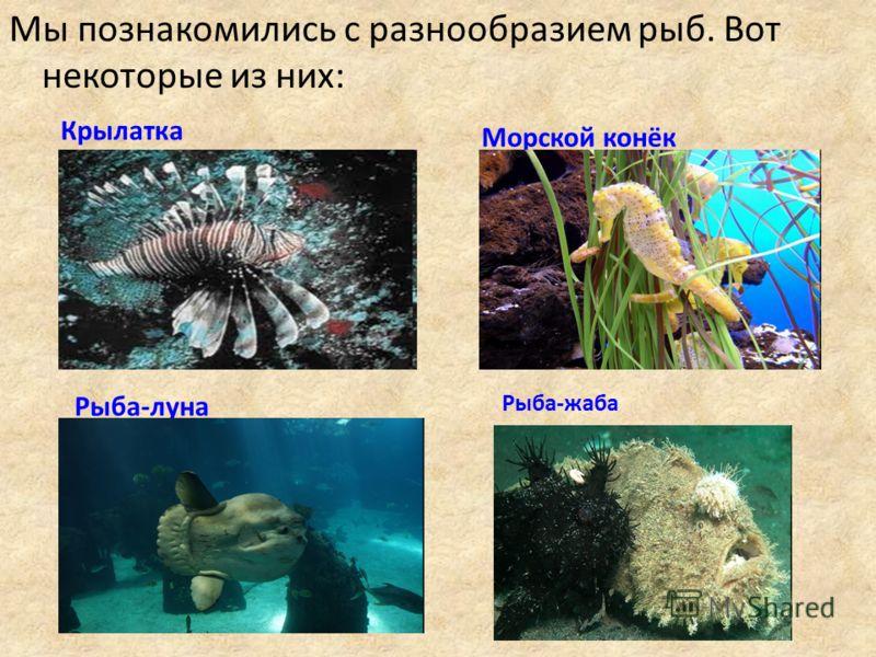 Мы познакомились с разнообразием рыб. Вот некоторые из них: Крылатка Морской конёк Рыба-луна Рыба-жаба