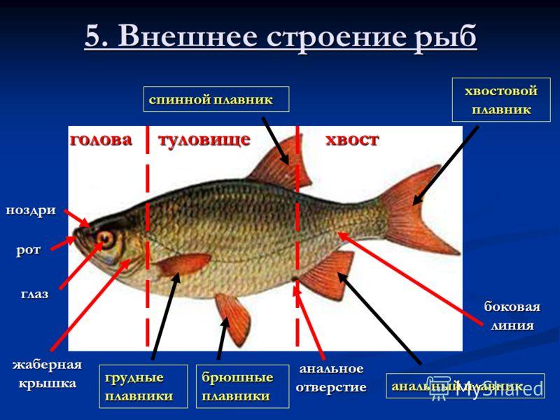 Принцесса на бобах 1997  информация о фильме