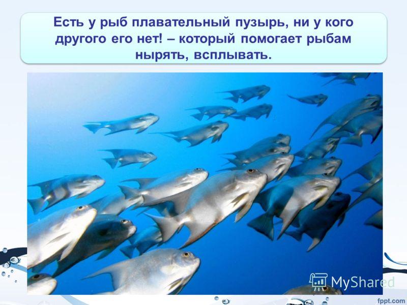 Есть у рыб плавательный пузырь, ни у кого другого его нет! – который помогает рыбам нырять, всплывать.