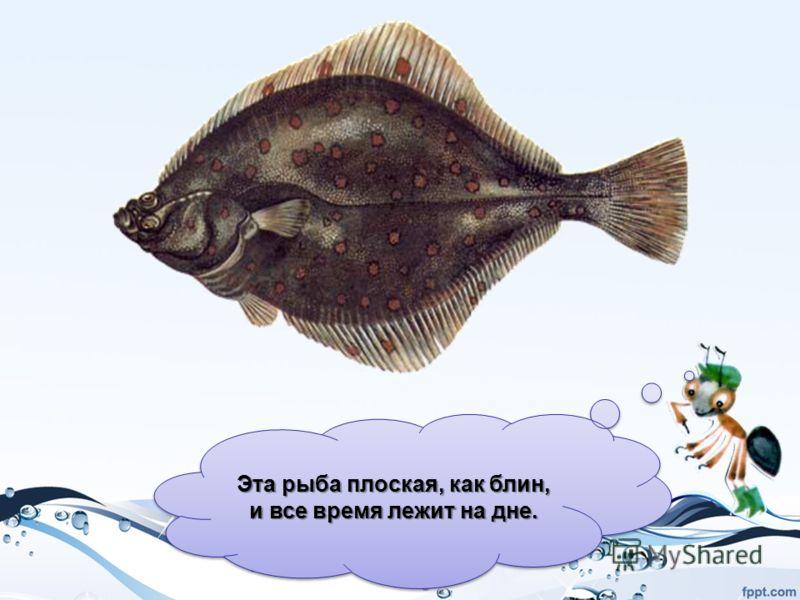 Эта рыба плоская, как блин, и все время лежит на дне.
