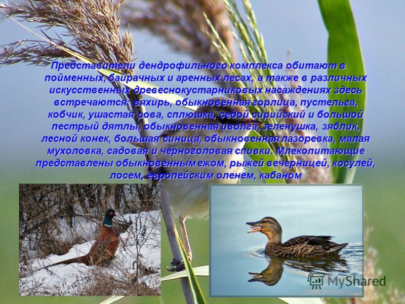 Представители дендрофильного комплекса обитают в пойменных, байрачных и аренных лесах, а также в различных искусственных древеснокустарниковых насаждениях здесь встречаются: вяхирь, обыкновенная горлица, пустельга, кобчик, ушастая сова, сплюшка, седо