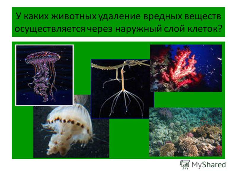 У каких животных удаление вредных веществ осуществляется через наружный слой клеток?