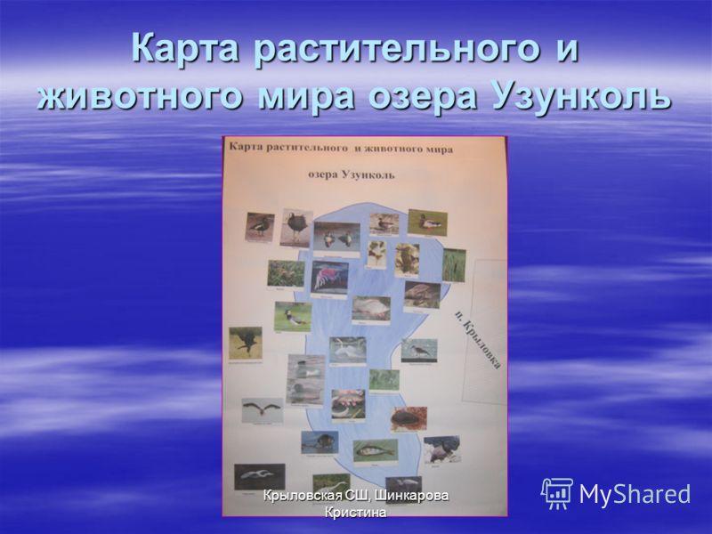 Карта растительного и животного мира озера Узунколь Крыловская СШ, Шинкарова Кристина