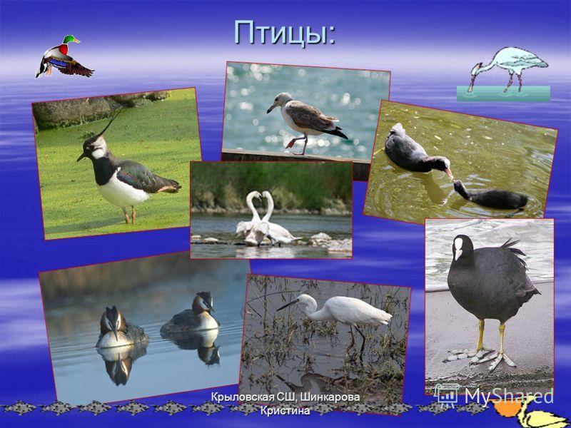 Птицы: