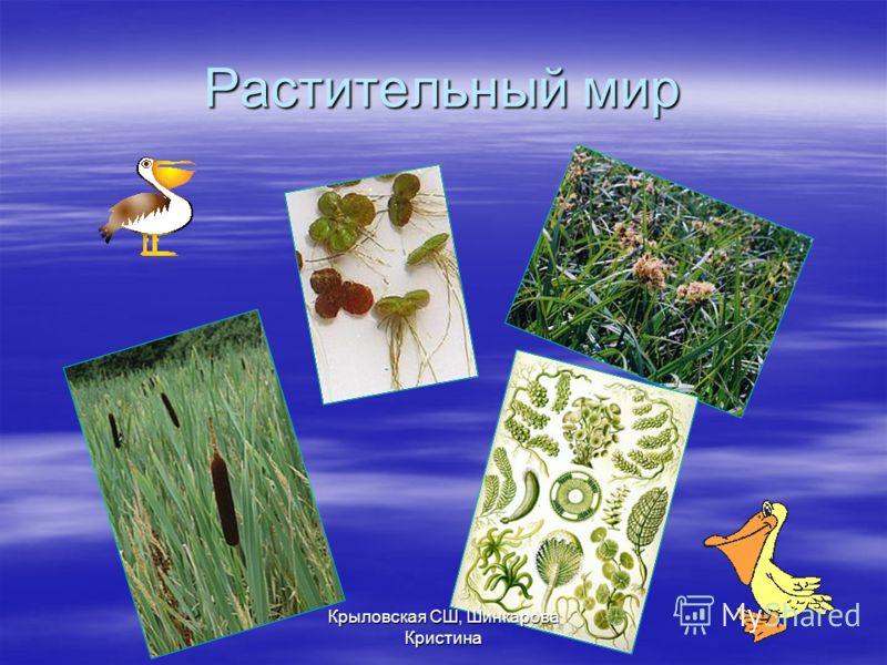 Растительный мир Крыловская СШ, Шинкарова Кристина