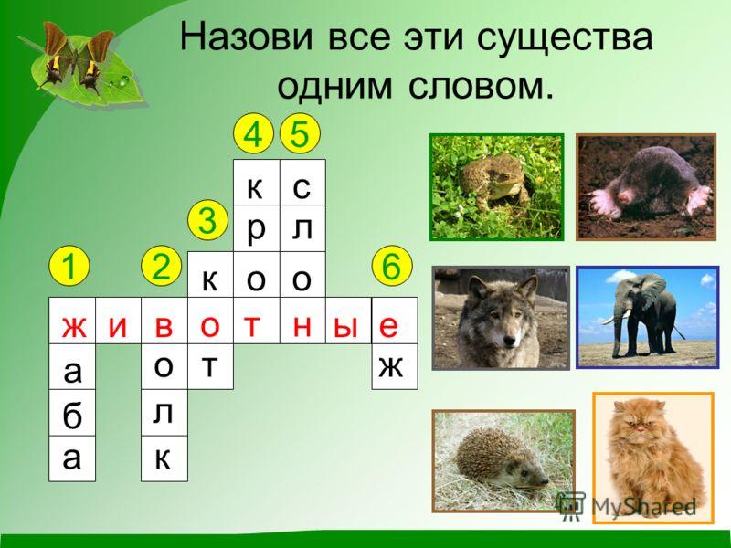 Назови все эти существа одним словом. 12 3 45 6 ж а б а в о л к к о т к р о т с л о н е ж жив отн ые
