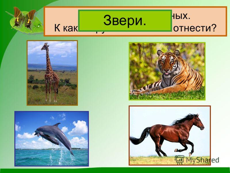 Назови этих животных. К какой группе их можно отнести? Звери.
