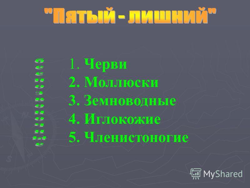 1. Черви 2. Моллюски 3. Земноводные 4. Иглокожие 5. Членистоногие