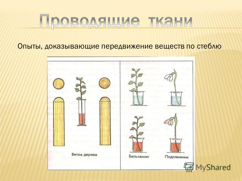 Опыты, доказывающие передвижение веществ по стеблю