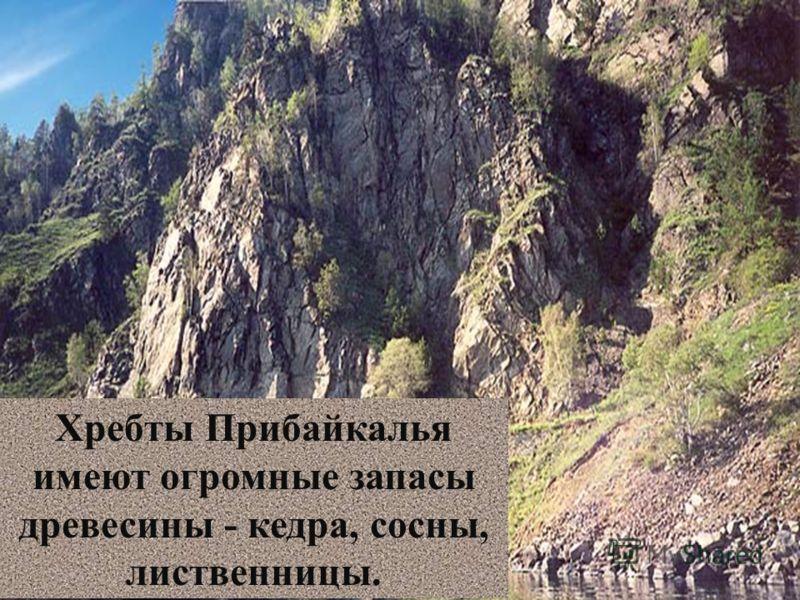 Хребты Прибайкалья имеют огромные запасы древесины - кедра, сосны, лиственницы.
