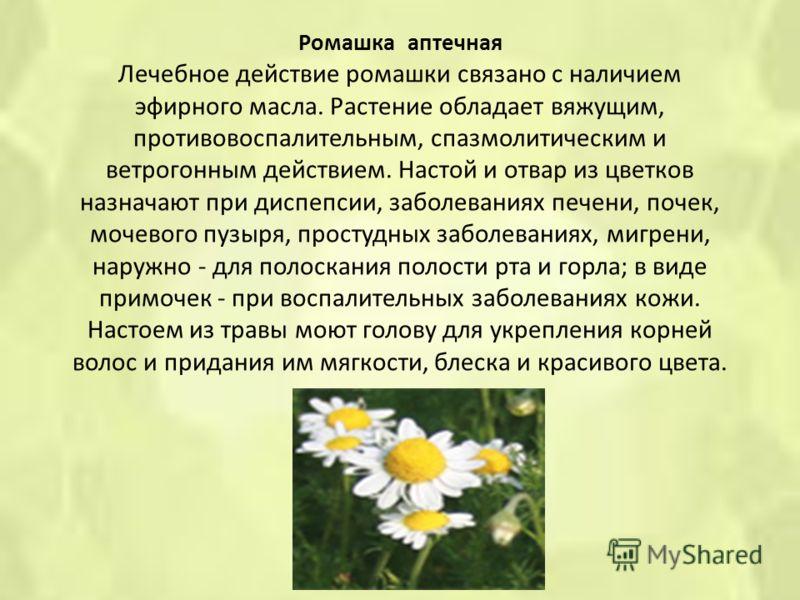 Ромашка аптечная Лечебное действие ромашки связано с наличием эфирного масла. Растение обладает вяжущим, противовоспалительным, спазмолитическим и ветрогонным действием. Настой и отвар из цветков назначают при диспепсии, заболеваниях печени, почек, м