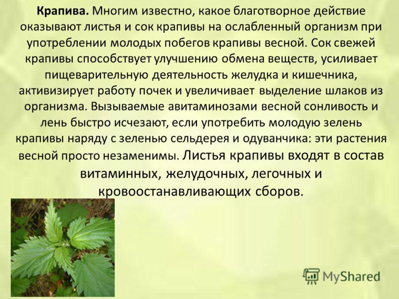 Крапива. Многим известно, какое благотворное действие оказывают листья и сок крапивы на ослабленный организм при употреблении молодых побегов крапивы весной. Сок свежей крапивы способствует улучшению обмена веществ, усиливает пищеварительную деятельн