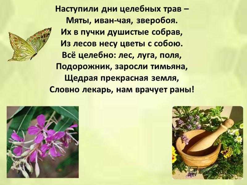 Наступили дни целебных трав – Мяты, иван-чая, зверобоя. Их в пучки душистые собрав, Из лесов несу цветы с собою. Всё целебно: лес, луга, поля, Подорожник, заросли тимьяна, Щедрая прекрасная земля, Словно лекарь, нам врачует раны!