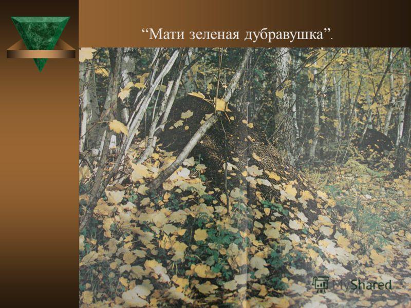 Мати зеленая дубравушка.