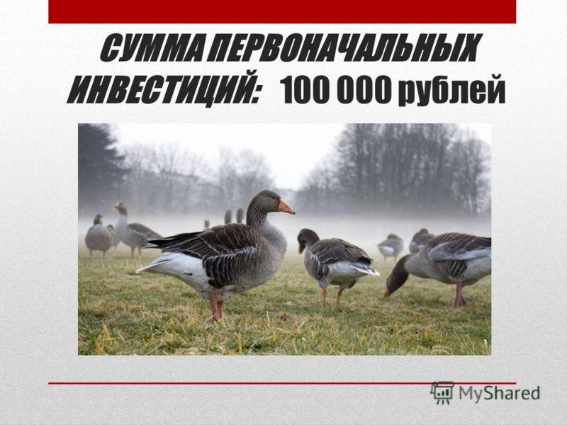 СУММА ПЕРВОНАЧАЛЬНЫХ ИНВЕСТИЦИЙ: 100 000 рублей