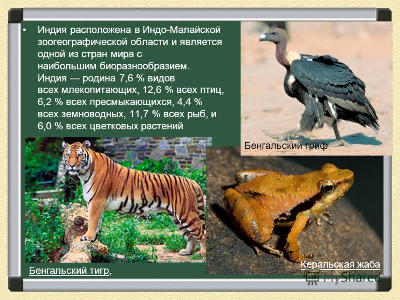 Индия расположена в Индо-Малайской зоогеографической области и является одной из стран мира с наибольшим биоразнообразием. Индия родина 7,6 % видов всех млекопитающих, 12,6 % всех птиц, 6,2 % всех пресмыкающихся, 4,4 % всех земноводных, 11,7 % всех р