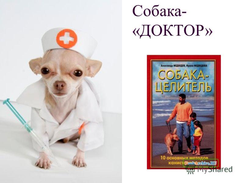 Собака- «ДОКТОР»