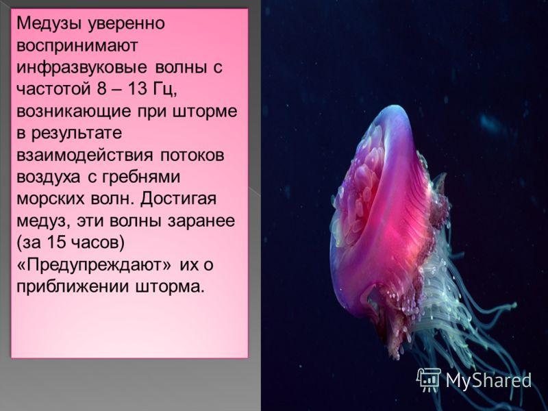 Медузы уверенно воспринимают инфразвуковые волны с частотой 8 – 13 Гц, возникающие при шторме в результате взаимодействия потоков воздуха с гребнями морских волн. Достигая медуз, эти волны заранее (за 15 часов) «Предупреждают» их о приближении шторма